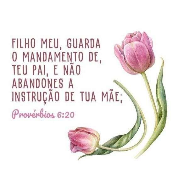 Provérbios 6:20